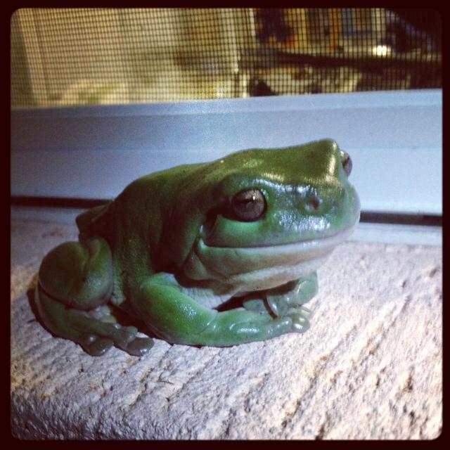 SEO Leap Frog